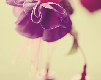 Fuchsia single flower photograph, green purple pink, pink and purple flower green leaves, photography vintage style
