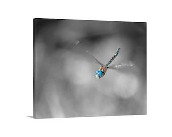 Dragonfly Art, Nature Photography, Dragonfly Print, Bug Art, Insect Art, In Flight, Picture Gift, Black and White, Giclee Print, Canvas Art