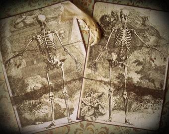 SALE - Memento Mori - Death Stickers