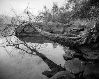 Tree in Fog Print, Art Print, Nature Photography, Neutral Wall Decor, River Art, Black and White Photography, Fine Art Photography Print