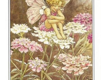 Candytuft Fairy Cicely Mary Barker Flower Fairies Vintage Print 1995 Wall Art Nursery Decor Fairy Print Home Decor Print Fine Art