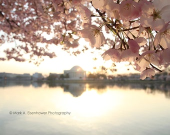 Cherry Blossom Photography Washington DC Print Photography Cherry Blossom Festival sakura Orange Pink Teal Flower Sunrise Jefferson Memorial