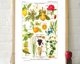 Fruit print kitchen wall art decor poster botanical illustrations vintage orange grape 5x7 8x10 8x12 plants poster