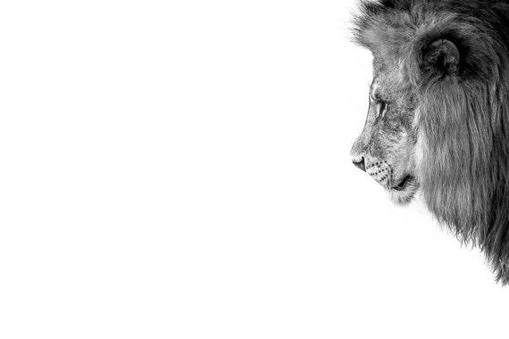 Lion Man Cave Art : Lion photography wall art print home decor man cave