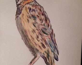 Yellow Warbler - original colored pencil bird drawing - bird