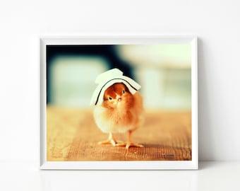 Photo Print 8x10 Rhode Island Red Chicken Wearing A Nursing Cap Hat Photograph Baby Animal Picture