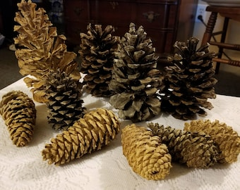 Natural and Bleached North Carolina Pine Cones - Group of 10