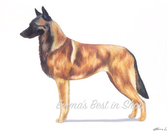 Belgian Malinois Dog - Archival Quality Fine Art Print - AKC Best in Show Champion - Breed Standard - Herding Group - Original Art Print