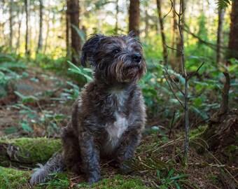 Ewok Dreams, Landscape Photography, Metal Print, Large Prints, Humboldt County CA, Dogs, DJerniganPhoto