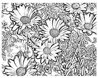 Color Me Cards   Daisy Garden (notecard)  5.5 x 4.25