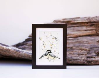2 - little black chickadee