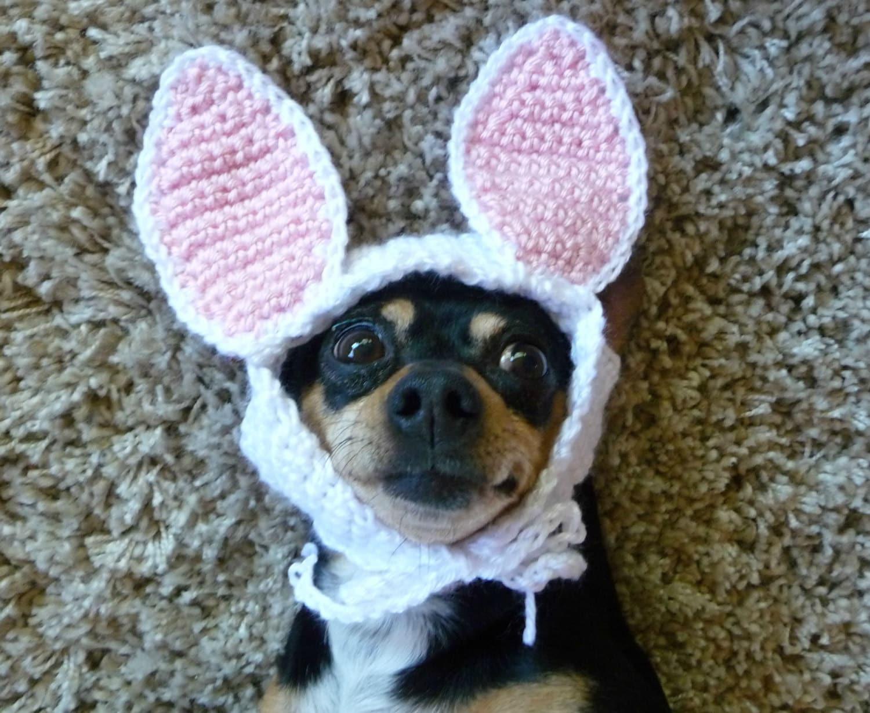Knitting Pattern Rabbit Hat : Dog wearing hat crochet pattern bunny for dogs halloween