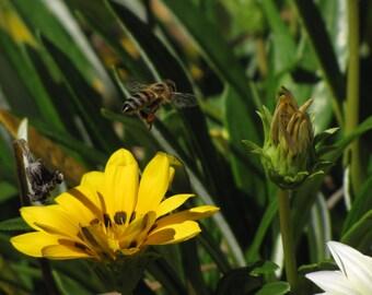 Browsing Bumble Bee