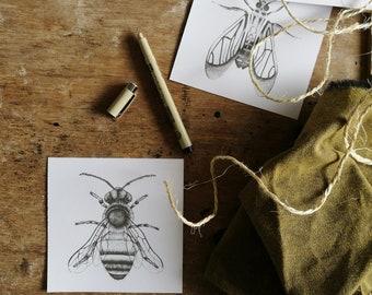 Botanical Illustration of a honey bee