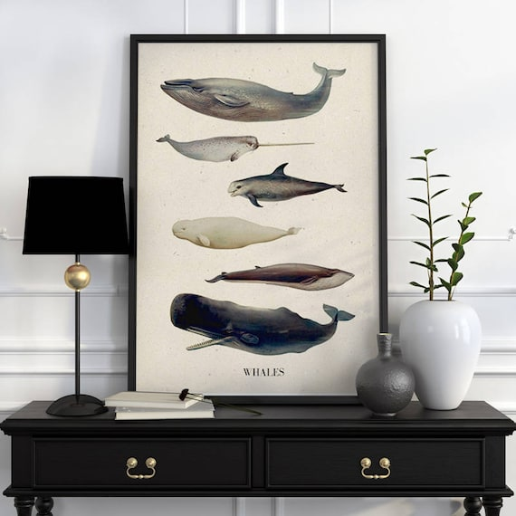 Whales A3 size poster, whales, whale poster, whale art, whale decor, animal art, animal decor, wall art, nursery art, whale print  SEA218WA3