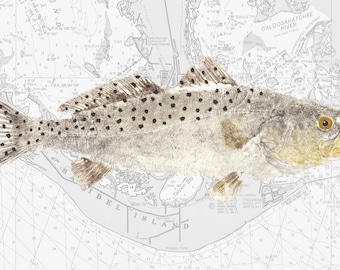 Spotted Seatrout Fish Print