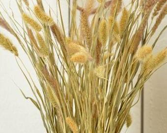 Dried Seteria Grass - Natural/Greens | Foxtail Millet | Dried Grass | Dyed Grass | Dried Plants | Natural Grass