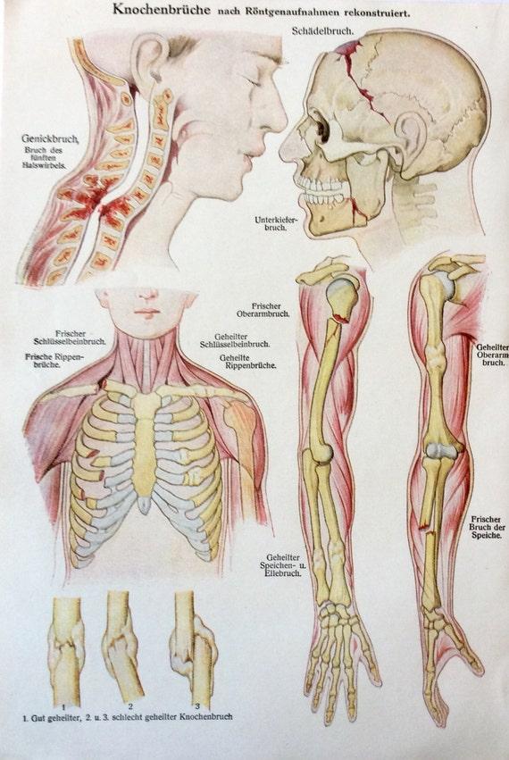 Ungewöhnlich Artikel Zum Anatomie Zeitgenössisch - Menschliche ...