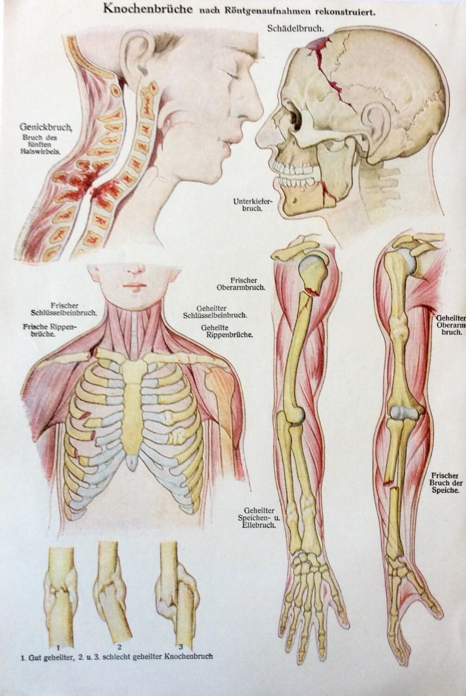 Tolle Weibliche Anatomie Bildung Ideen - Anatomie Ideen - finotti.info