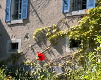 French cottage garden with poppy, stone rustic building and blue shutters