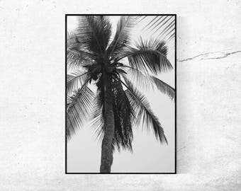 Palm tree palm trees black white black and white modern art photography print poster 45 x 30 cm