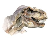 T-Rex Painting - Print fr...