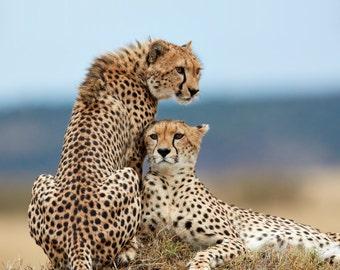 Two Cheetah on Termite Mound