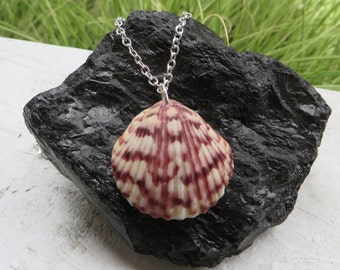 Purple Striped Shell Necklace