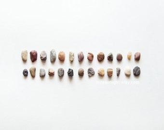 Roches & N5 de brindilles. 8 x 10. tirage d'Art photographique histoire naturelle. Style simple minimal. Accessoires décoration naturelles. Jardin botanique d'intérieur