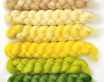 Hand dyed roving -  Blue Faced Leicester (BFL) wool spinning fiber - 6.3 ounces - Daffodil Song