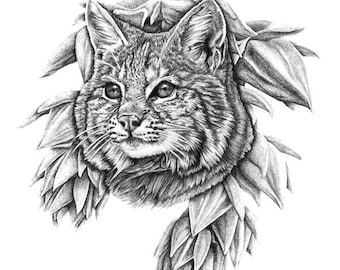 BEASTS of the DESERT: BOBCAT, Print - Pencil on Bristol, a detailed animal drawing, a monochrome pencil illustration of a bobcat
