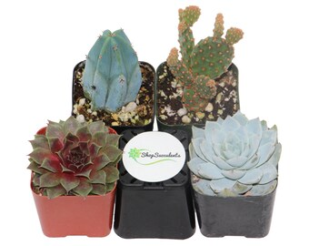 Shop Succulents Cactus and Succulent Collection