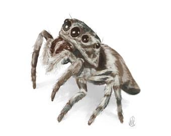 Jumping Spider portrait 8.5 x 11
