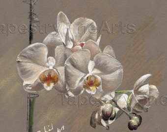 Original Oil Pastel Drawing - White blooming orchid - Contemporary Fine-Art - Vibrant floral wall art - LIMITED EDITION Giclee Print