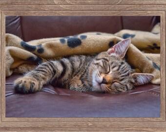 Sleeping silver tabby cat photograph, pet photography, cat kitten photography, sleeping kitten, animal photography, kitten print, cat print