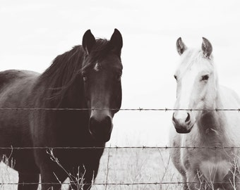 Horse photography, southwest, midwest, wall decor, equestrian, western, black, white, Country Kitchen & Living Room, new years decor