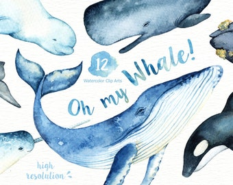 Oh My Whale! Watercolor Clip Arts,Whale clipart, Marine mammals clip art, Killer whale clipart, Whales illustration, Blue whale illustration