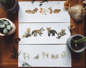 Woodland Families Illustration Print Pack