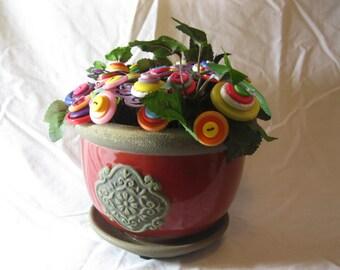 Button Plants