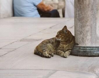 Cats of Istanbul Photography Print, Near Hagia Sophia, Turkey. Cat photography, wall art, travel photo, animal photo print, happy cat