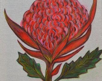 Waratah Flower - Painted Canvas