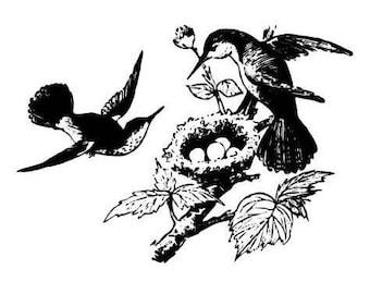 HUMMINGBIRDS NESTING unmounted bird rubber stamp, Spring, nest & eggs, humming bird, Sweet Grass Stamps No.9