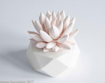 PEACH Pastel Succulent Sculpture Geometric Planter Succulent Gift Indoor Plant Desktop Accessory Modern Hexagon Home and Office Decor