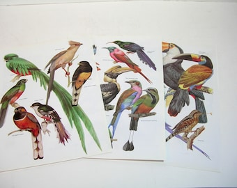 Book Page Prints, Colorful Birds, Three Ready To Frame Prints