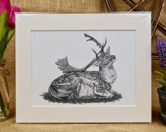 Fallow Deer Giclée Print (Size A5)
