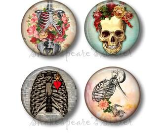 Human Anatomy - Fridge Magnets - Skeleton Magnets - 4 Magnets - 1.5 Inch Magnets - Kitchen Magnets