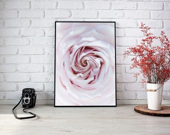 Poster print rose photography