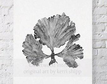 Seaweed II in Charcoal 11x14