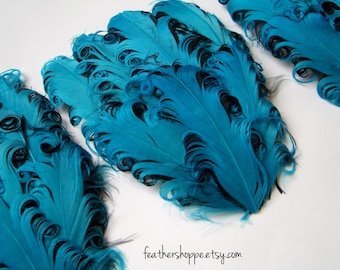 SET OF 5 - Nagorie Feather Pads - Turquoise on Black Curled Goose Pad
