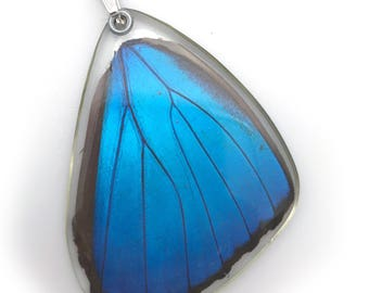 Butterfly wing pendant, butterfly wing necklace, real blue morpho butterfly pendant (bottom wing)
